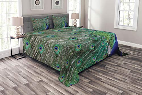 Lunarable Peacock Bedspread Set Queen Size, Peacock Displaying Elongated Majestic Feathers Open Wings Picture, Decorative Quilted 3 Piece Coverlet Set with 2 Pillow Shams, Navy Blue Green Pale Brown (Peacock Feathers Displaying)