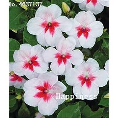 Kasuki Balsam Flower Bonsai Impatiens Balsamina Bonsai Flower, Toutch-Me-Not Flower for Home Garden Plants 100 Bonsai/Bag - (Color: 23): Garden & Outdoor