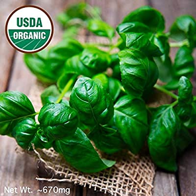 Gaea's Blessing Seeds - Sweet Basil Seeds 400+ Organic Seeds Non-GMO Large Leaf Italian Heirloom Genovese Pesto Open-Pollinated High Yield