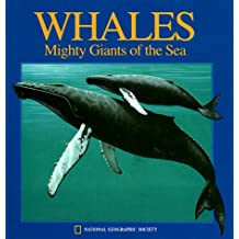 Pop-Up: Whales