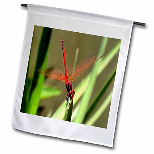 Taiche - Acrylic Painting - Dragonfly - Beautiful Firecracker Dragonfly - 12 x 18 inch Garden Flag (fl_245529_1) (Streamer Gossamer)