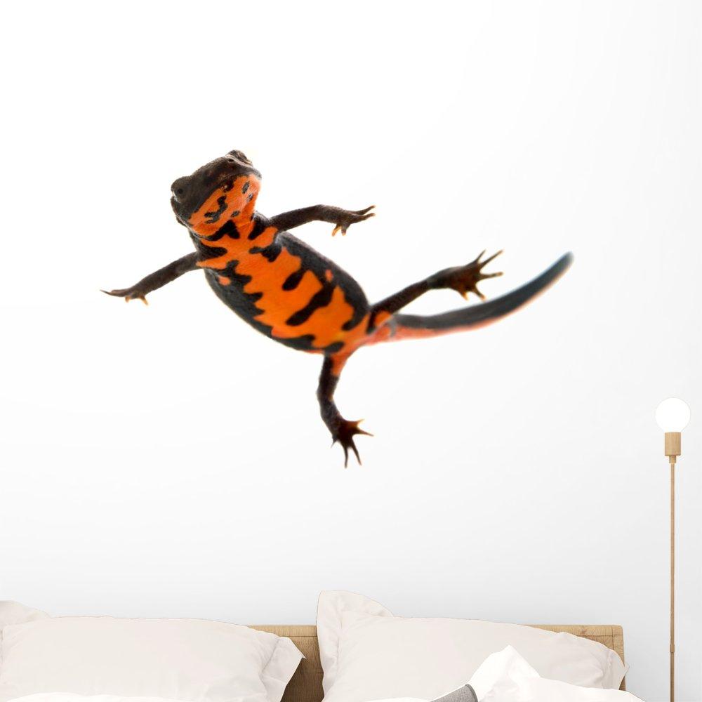 Amazon.com: Natación Fire bellied Newt calcomanía de pared ...
