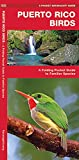 Puerto Rico Birds: A Folding Pocket Guide to Familiar Species (A Pocket Naturalist Guide)