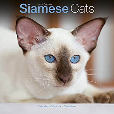 Siamese Cat Calendar - Calendars 2016 - 2017 Wall Calendars - Cat Calendar - Animal Calendar - Siamese Cats 16 Month Wall Calendar by Avonside