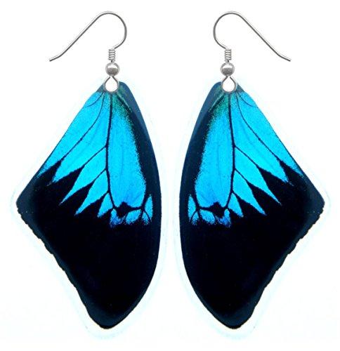 Real Butterfly Wing Earrings - Papilio Ulysses Butterfly Earrings (Resin Coated)