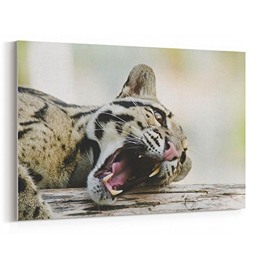 Westlake Art - Wallpaper Animal - 32x48 Canvas Print Wall Art - Canvas Stretched Gallery Wrap Modern Picture Photography Artwork - Ready to Hang 32x48 - Wallpaper Expressions Color