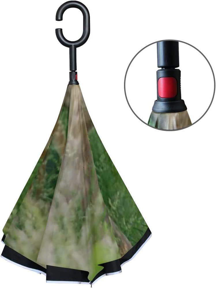 Double Layer Inverted Inverted Umbrella Is Light And Sturdy Big Meadow Shenandoah National Park Doe Reverse Umbrella And Windproof Umbrella Edge Nigh