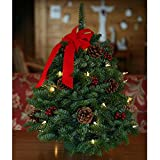 Fresh-cut Classic Pre-lit 18-inch Tabletop Tree (PACK OF 2)