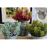 SUPLA 3 Pcs 3 Colors 6 fork/pcs Fake Echeveria unpotted faux succulent Plant Houseplants wall simulation flower Microlandschaft Decorative Fake succulents