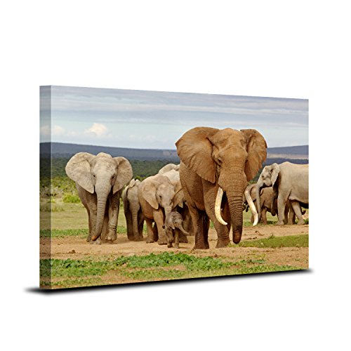 elephants pictures - 6