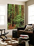 Muir Woods National Monument, Redwood Forest, California, Usa Wall Mural by Gerry Reynolds 48 x 72in