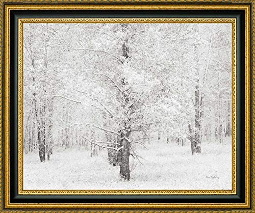 Snow Covered Cottonwood Trees by Alan Majchrowicz - 23.25