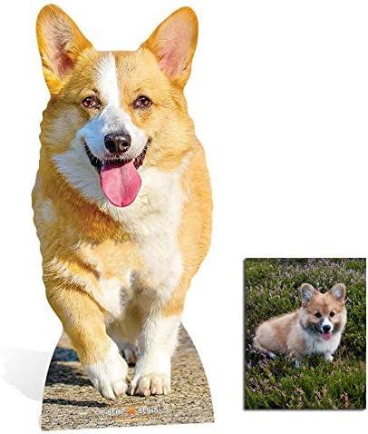 Fan Pack Royal Corgi Dog Lifesized Mini Cardboard Cutout Includes 8x10 Star Photo Standee Standup