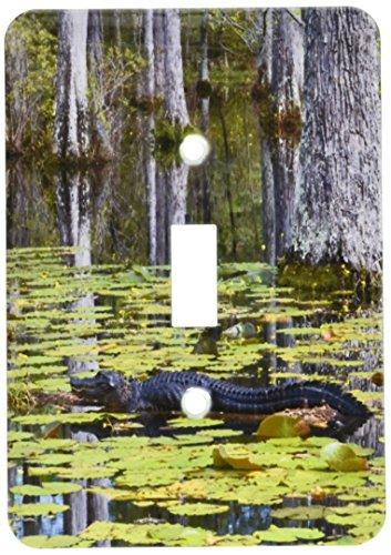 lsp_94248_1 South Carolina, Cypress Gardens Alligator, Sw...