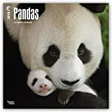 Pandas 2018 12 x 12 Inch Monthly Square Wall Calendar, Wildlife Zoo Animals Bears China Asia (Multilingual Edition)