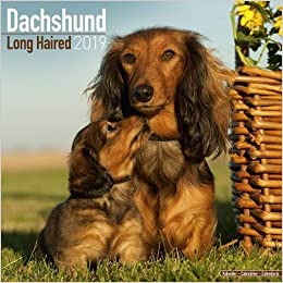 longhaired dachshund calendar dog breed calendars 2018 2019