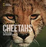 Face to Face with Cheetahs, Chris Johns and Elizabeth Carney, 1426303238