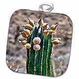 3dRose Danita Delimont - Cacti - Pachycereus pringlei, Cardon cactus, Baja, Mexico - SA13 MWI0043 - Mark Williford - 8x8 Potholder (phl_141610_1)