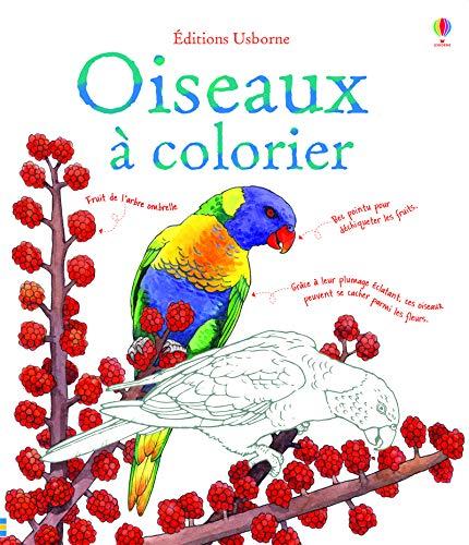 Coloriage Oiseau Sur Arbre.Oiseaux A Colorier Amazon Fr Megan Cullis Jenny Cooper Nelupa