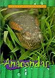 Anacondas (Animals of the Rain Forest)
