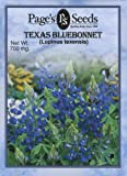 Texas Bluebonnet (W)