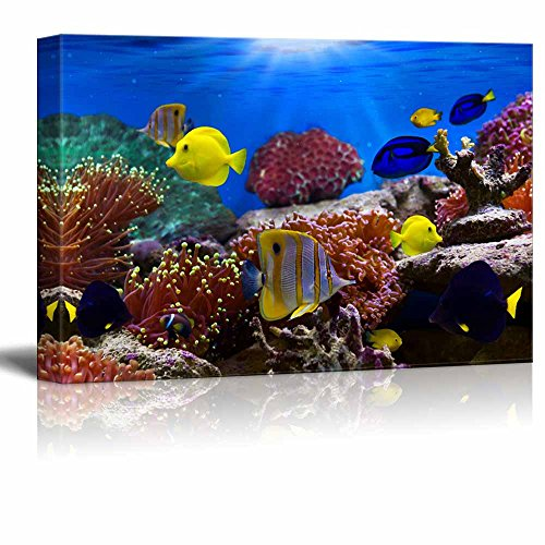 Canvas Wall Art - Coral Reef and Tropical Fish Under The Ocean | Modern Home Decor Canvas Prints Gallery Wrap Giclee Printing & Ready to Hang - 32