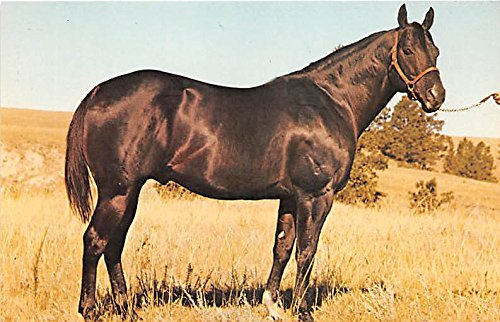 Moolah Bee Sweet Franktown, Colorado, CO, USA Old Vintage Horse Racing Postcard Post Card ()