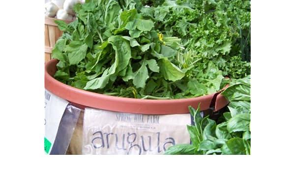 235 semillas R/úcula ensaladas verdes Groco Roquette