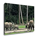 Ashley Canvas, Forest Elephant Loxodonta Africana Cyclotis, Home Decoration Office, Ready to Hang, 20x25, AG5258050