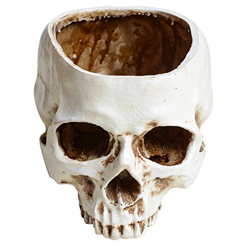 CHICHIC Realistic Resin Human Skull Model Home Statue, 6 Inch