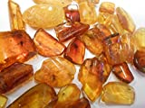 Genuine Fossil Baltic Amber Resin with Insect