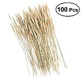 FidgetFidget 100PC Wheat Dried Flower Bouquet Premium Sheave Bundle Natural Rice Dried Flower