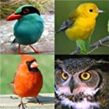 COMPLETE SET- North America Series, 100+ Bird Sounds and Bird Calls on 4 CDs: 5 total hours of audio