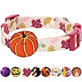 Blueberry Pet 8 Patterns Thanksgiving Fall Obsession Ginkgo Biloba Leaf Designer Dog Collar with Pumpkin, Small, Neck 12''-16'', Adjustable Collars for Dogs