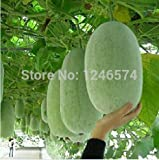 20pcs/lot hot selling Chinese Green Vegetable Winter Melon Seeds For DIY Home Garden Plants