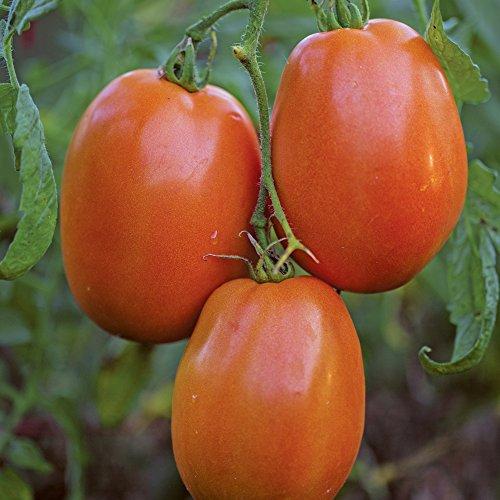 Burpee Supersauce Tomato Seeds 25 seeds