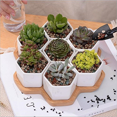 Ceramic Flower Pot,Y&M(TM) Pack of 7 White Simple Design Sucuulent Plant Pot/Cactus Plant Pot Flower Pot with bamboo tray/Container/Planter.