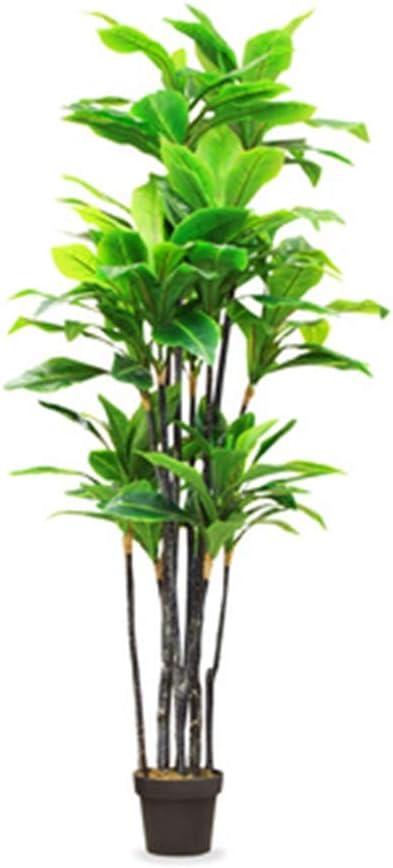 sumicorp.com Bambuspalme 20 x Chamaedorea seifrizii Bambus Samen ...