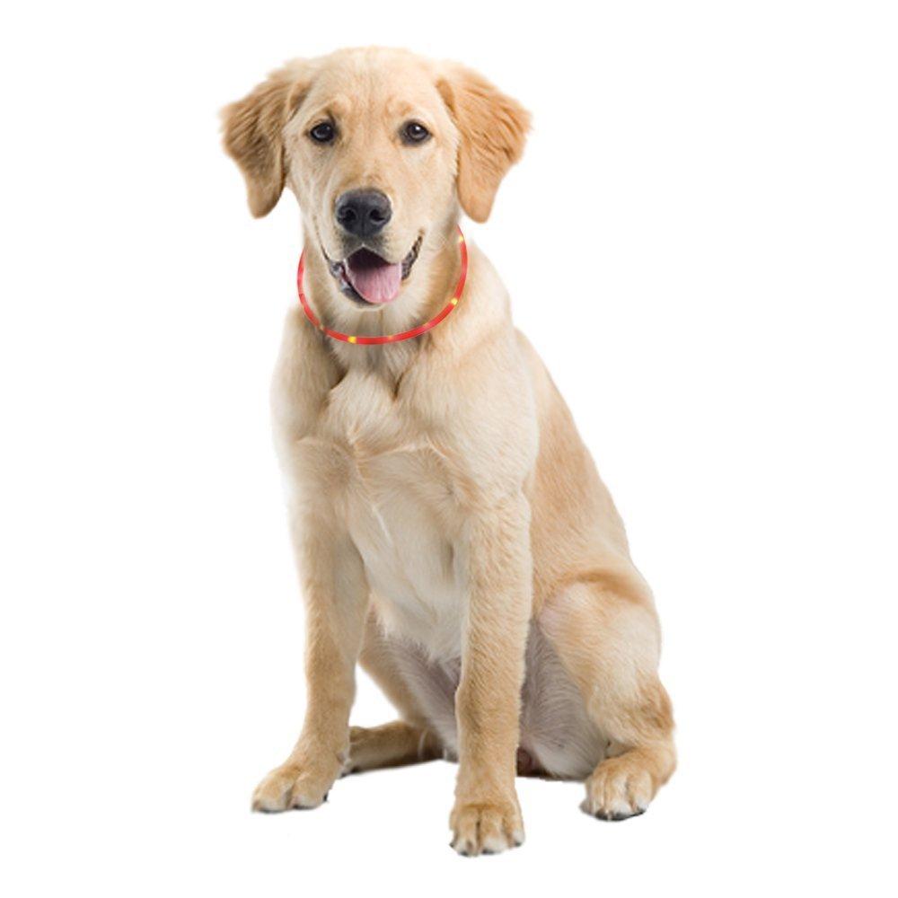 ZOGIN Collar de perro LED, collar de seguridad recargable USB para perro gato y otro animal doméstico, color amarillo