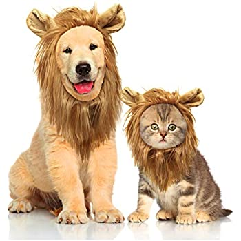 Amazon.com : Trump Style Cat Wig Pet Costume, Donald Dog Head Wear ...
