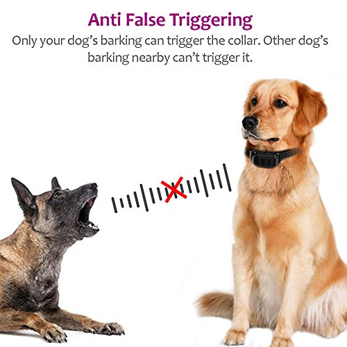PetFere Dog Bark Collar, Bark Collar Large Dog, IP67 Waterproof Rechargeable Bark Collar Barking Collar Smart Detected Chip Medium/Large Dogs-Stop Barking Safe (20-100LBS) (Big)
