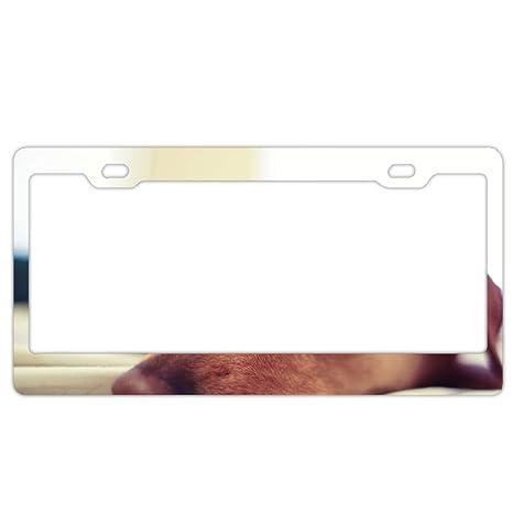 Animal Dachshund Dogs License Plate Frame/Inspired License Plate Frame Waterproof Mental Frames