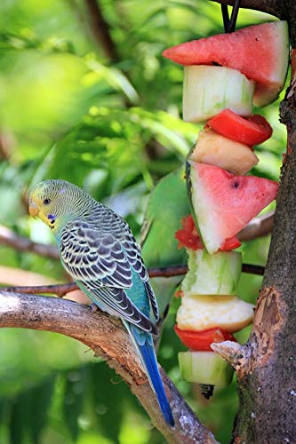 Home Comforts Peel-n-Stick Poster of Eat Bird Animal Buffet Budgie Melon Food Vivid Imagery Poster 24 x 16 Adhesive Sticker Poster Print