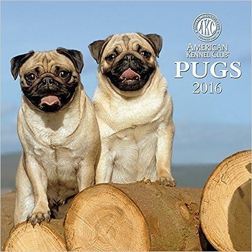 Pugs American Kennel Club 2016 Wall Calendar by Zebra