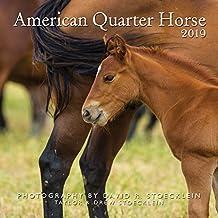 2019 American Quarter Horse Calendar