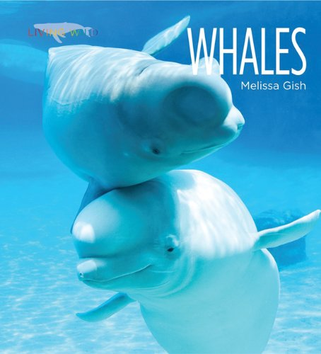 Download Living Wild: Whales pdf