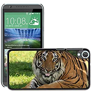 Hot Style Cell Phone PC Hard Case Cover // M00108686 Tiger Big Cat Feline Wildlife // HTC Desire 820