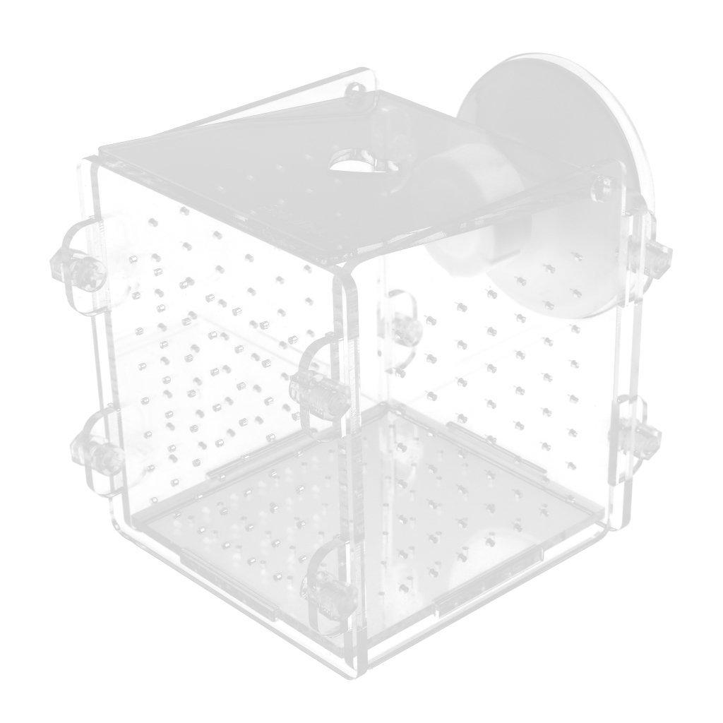 Dolity Boîte de Reproduction Pondoir Isoloir Ecloserie - Meubles Ornement de Aquarium Réservoir - Carré