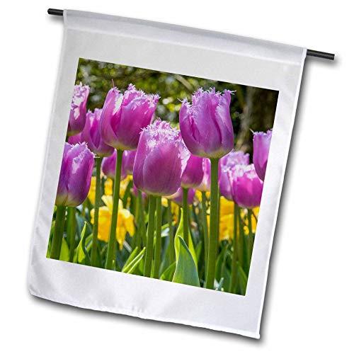- 3dRose Danita Delimont - Tulips - Fringed Pink Tulips. Netherlands. - 12 x 18 inch Garden Flag (fl_313794_1)