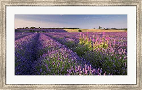 - Fields of Lavander by Adam Burton Framed Art Print Wall Picture, Silver Scoop Frame, 41 x 26 inches